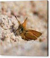 European Skipper Canvas Print