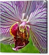 Exotic Orchids Of C Ribet Canvas Print