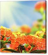 Floral Background. Lantana Flowers Canvas Print