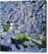 Giants Causeway, Co Antrim, Ireland Canvas Print