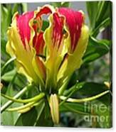Gloriosa Named Rothschildiana Canvas Print