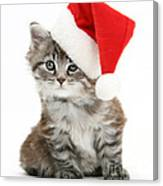 Maine Coon Kitten Canvas Print