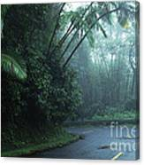 Misty Rainforest El Yunque Canvas Print