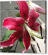 Orienpet Lily Named Scarlet Delight Canvas Print
