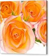 4 Roses Over White Canvas Print