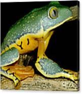 Splendid Leaf Frog Canvas Print