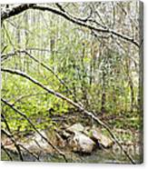 Spring Snow Along Williams River Canvas Print