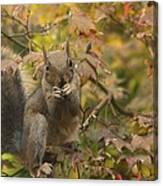 Squirrel Dinner Canvas Print