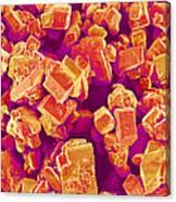 Sugar Crystals, Sem Canvas Print