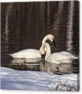 Trumpeter Swans Canvas Print
