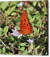 42- Fritillary Butterfly Canvas Print