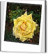 Flowers Flowers And Flowers Canvas Print