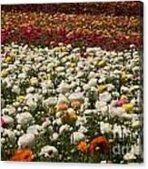 Flower Fields Canvas Print