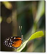 A Butterfly Rests On A Leaf Canvas Print