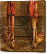 Anatomie Generale Des Visceres Canvas Print