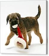 Border Terrier Puppy Canvas Print