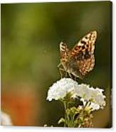 Butterfly On Blooming Flowers Canvas Print