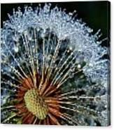 Dandelion With Dew Drops Canvas Print