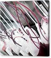 Donor Blood Processing Canvas Print