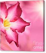 Floral Background Canvas Print