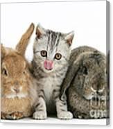 Kitten And Rabbits Canvas Print