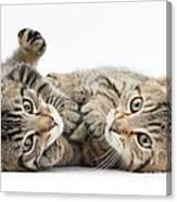 Kitten Companions Canvas Print