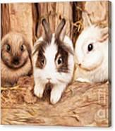 5 Little Rabbits Canvas Print