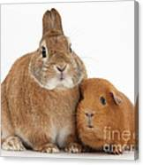 Rabbit And Guinea Pig Canvas Print