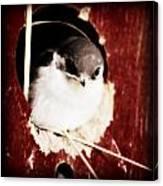 Red Barn Birdie Canvas Print