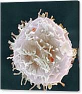 Stem Cell, Sem Canvas Print