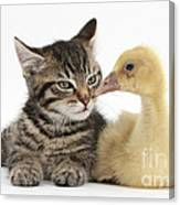 Tabby Kitten With Yellow Gosling Canvas Print