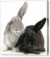 Two Rabbits Canvas Print