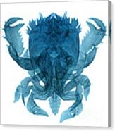 X-ray Of Deep Water Crab Canvas Print