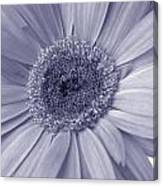 5540c8 Canvas Print