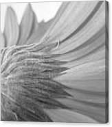 5572-2-002 Canvas Print
