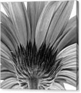 5574-31c Canvas Print