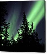 Aurora Borealis Above The Trees Canvas Print