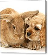 Cocker Spaniel And Rabbit Canvas Print