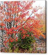 Fall Color Along The Highland Scenic Highway Canvas Print
