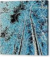 Forest Art Canvas Print