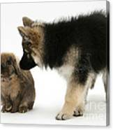 Puppy And Rabbit Canvas Print