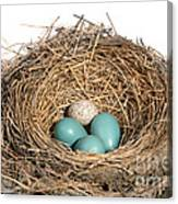 Robins Nest And Cowbird Egg Canvas Print