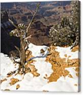 Winter Time On The South Rim Canvas Print