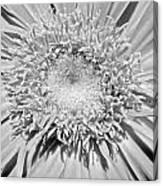 63341c Canvas Print