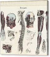 Anatomie Methodique Illustrations Canvas Print