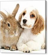 Cocker Spaniel And Rabbit Canvas Print