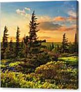 Dolly Sods Wilderness Canvas Print