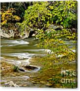 Fall Along Williams River Canvas Print