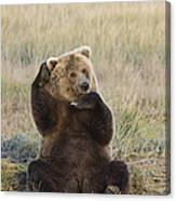 Grizzly Bear Ursus Arctos Horribilis Canvas Print