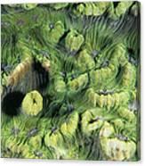 Hard Coral Canvas Print